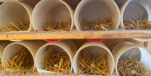 Chickens-Nesting boxes